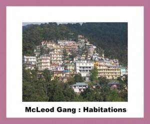 McLeod_Ganj habitations