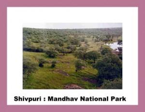 shivpuri mandhav national park